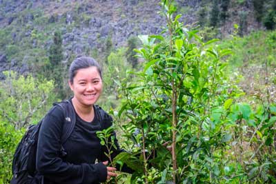 Ngoc with young wild tea tree in Ha Giang